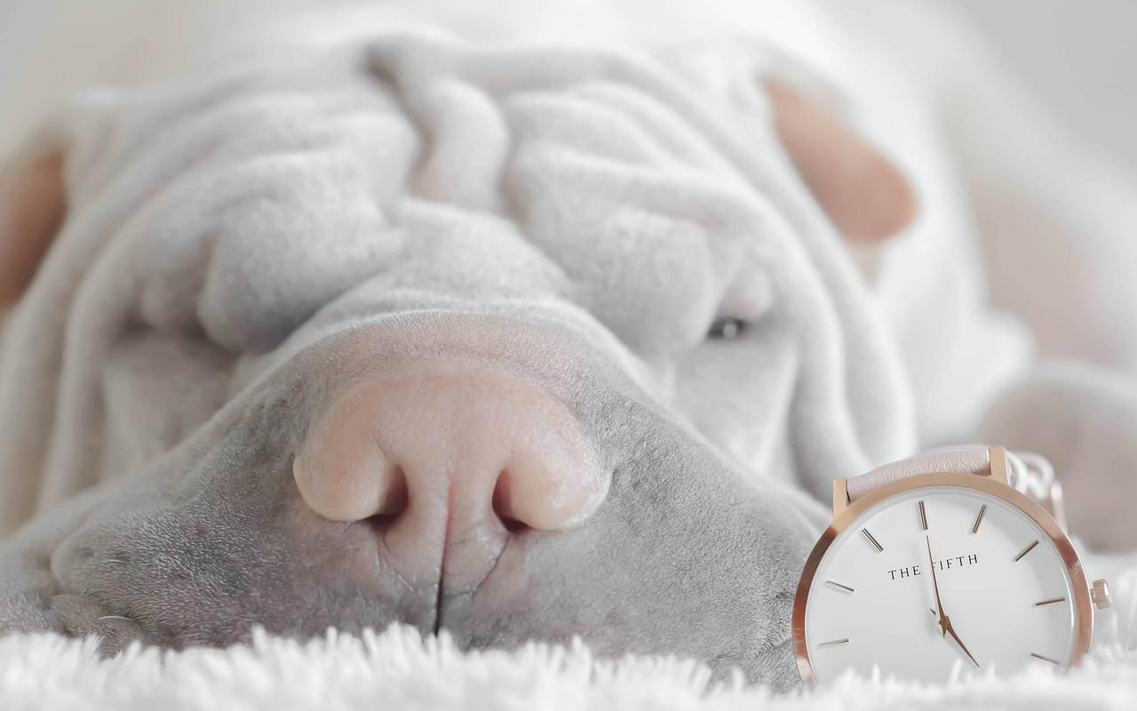寝坊して遅刻