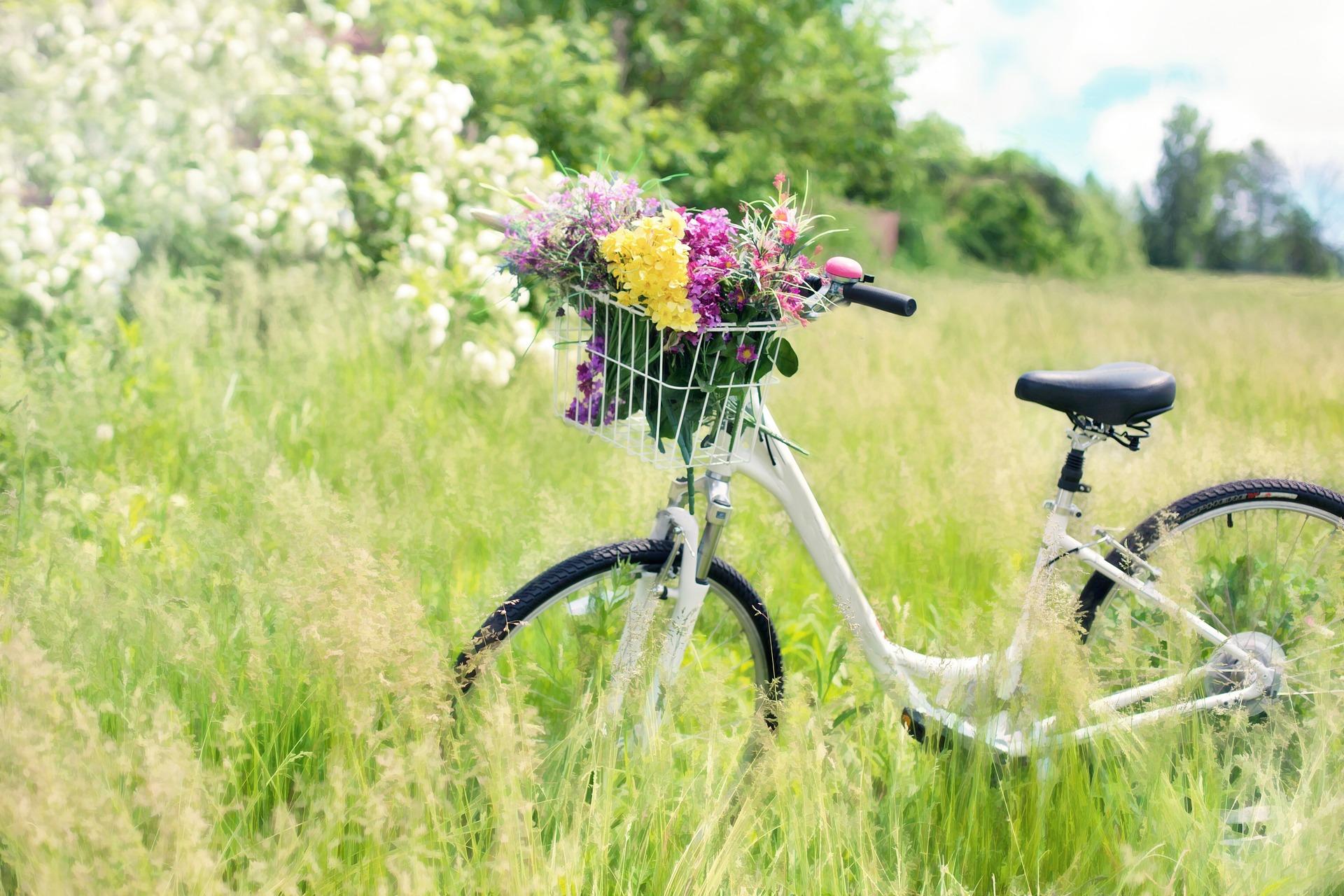 田舎の街と自転車