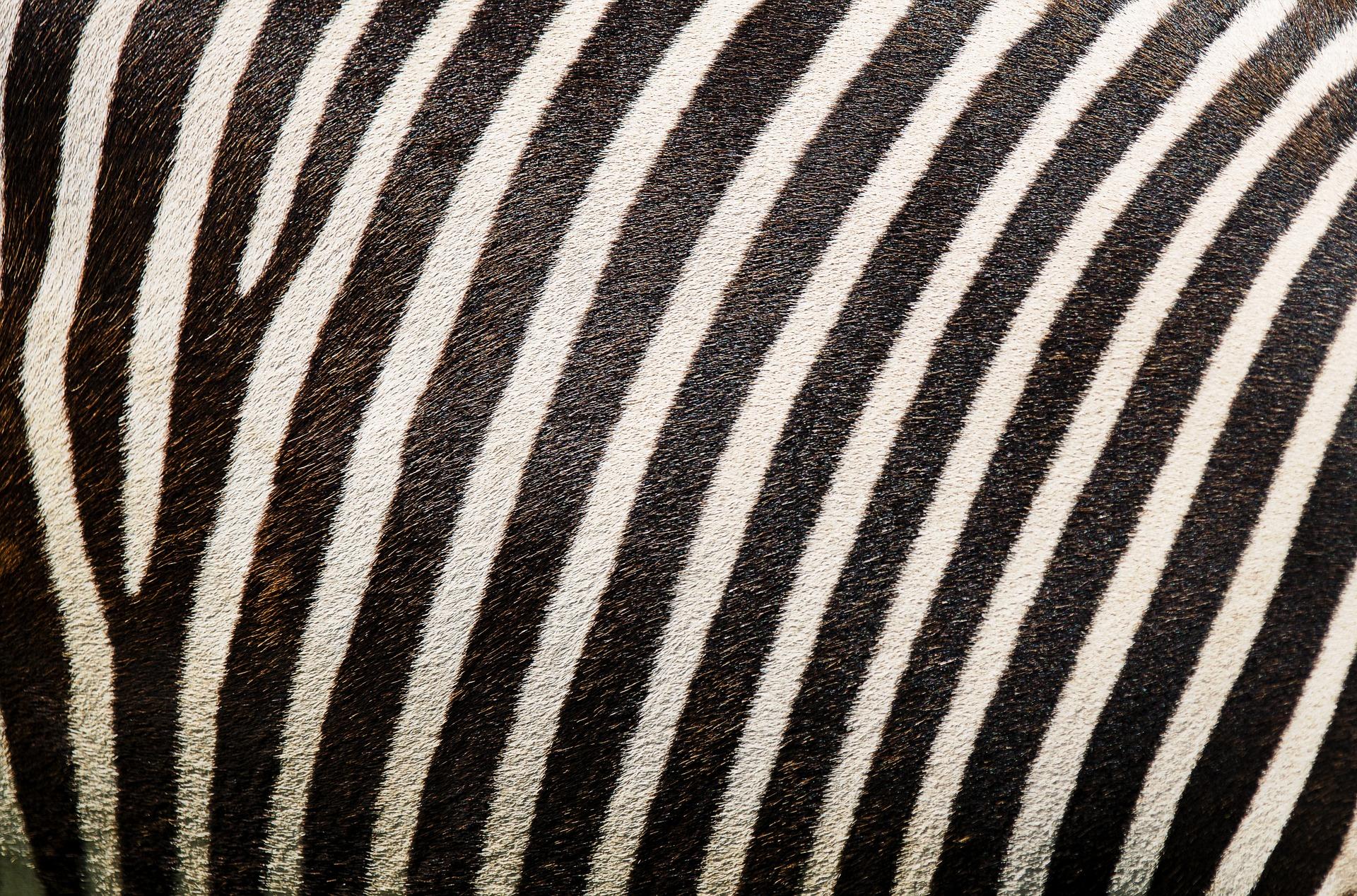 アイコスの白とネイビー色に似た動物