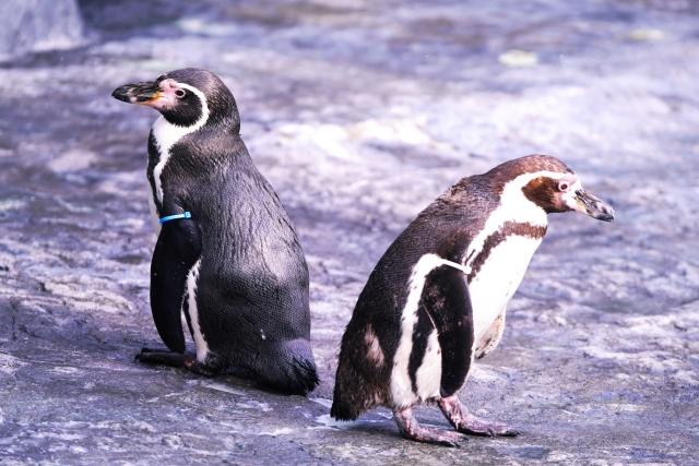 グローハイパープラスのファミマ限定カラー「ペンギン柄」